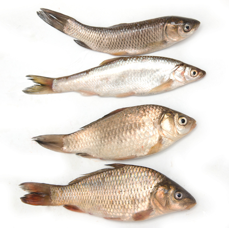 small fish on a white background Stock Photo