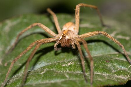 Spider on a sheet