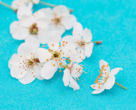 white flowers on a blue background Stock Photo