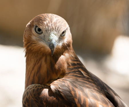 bird hawk Stock Photo