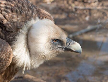 predatory bird head