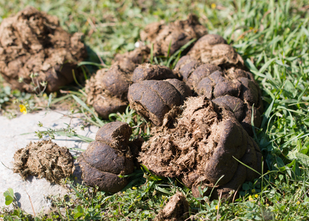 horse droppings on the grass Stock Photo