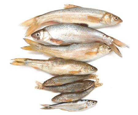 different fish on a white background