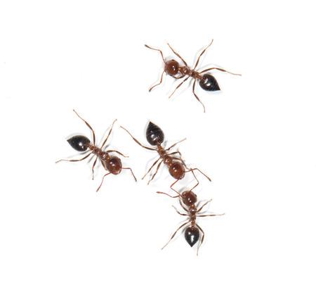 흰색 배경에 개미 스톡 콘텐츠