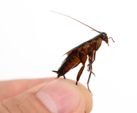 cockroach in hand Stock Photo