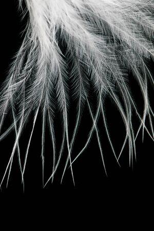 검정색 배경에 흰색 깃털