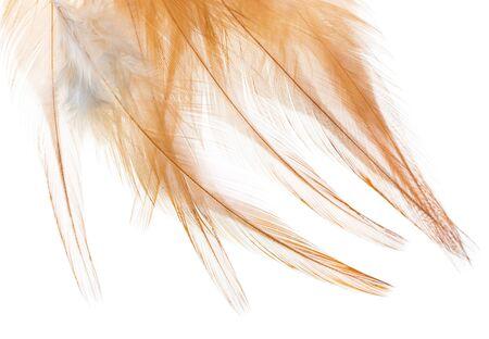 흰색 배경에 갈색 깃털 스톡 콘텐츠