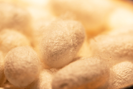 White cocoons of silkworm