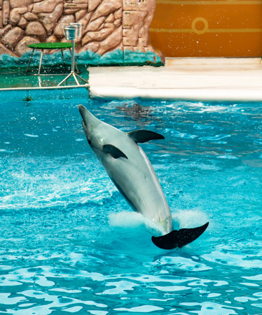 the dolphin jumps into the water