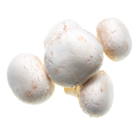champignon mushrooms on a white background