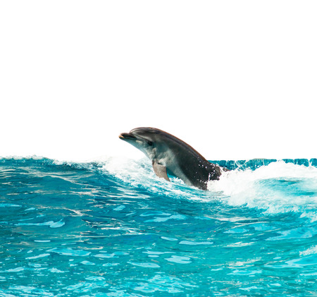 dolphin jump from the water on a white background Stock Photo
