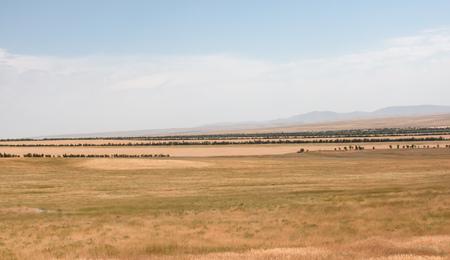 natural landscape steppe