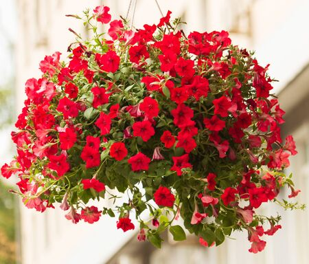 red flowers on hanging branches