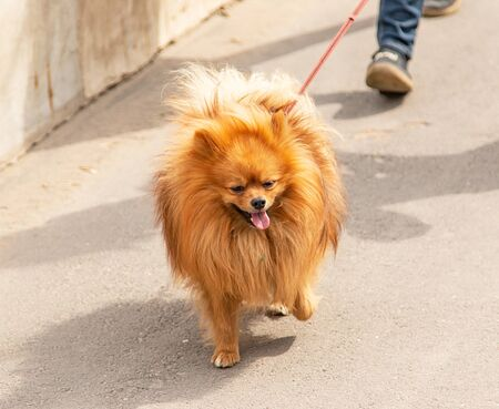 dog on a walk in the park