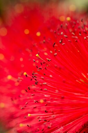 red fluffy flower as background Banco de Imagens