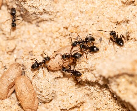 ants with larvae