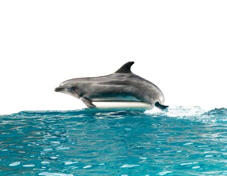 dolphin in the water on a white background Foto de archivo