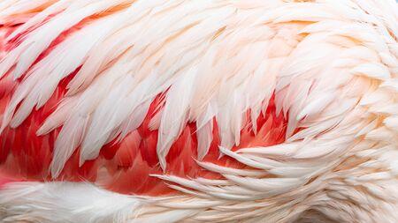 flamingo feathers as a background Фото со стока