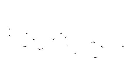 silhouettes of little birds on a white background