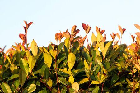 colorful leaves on a bush as background Фото со стока