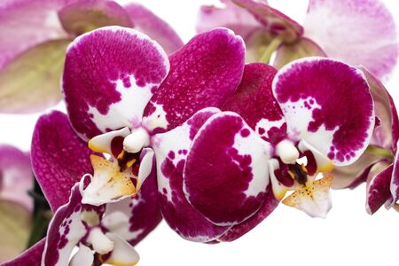 orchid flowers with lilac white flowers Фото со стока