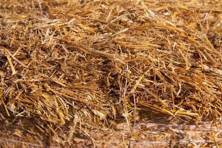 dry grass hay as a background