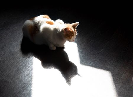 white cat with with reflection of its shadow Фото со стока