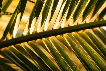 leaf of palm as background