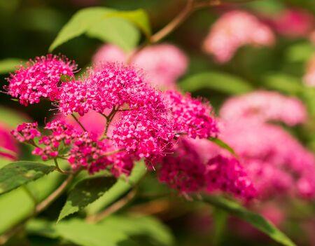 pink small flowers on a branch Фото со стока