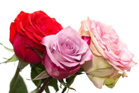 rosas rosadas y rojas como fondo
