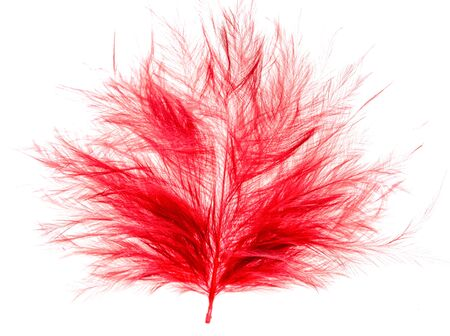 red feather on a white background Banco de Imagens