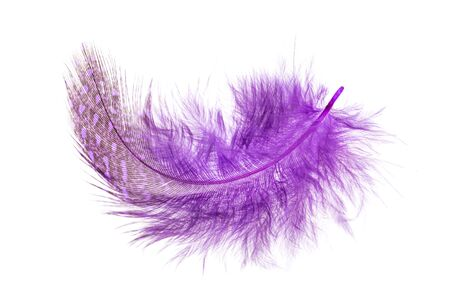 purple feather on a white background Banco de Imagens
