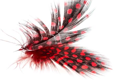 multi-colored feathers as a background on a white background