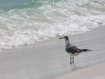 Seagull overlooking surf on the Gulf of Mexico. Stock fotó