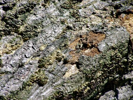 Detail of tree bark.