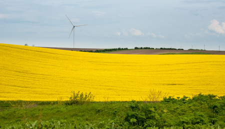 Rapeseed fields and wind power plant in Bulgaria. photo