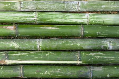 Bamboo on grass background