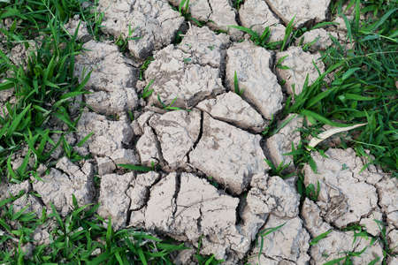 Cracked land with grass Stock Photo