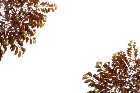 Brown leaves frame