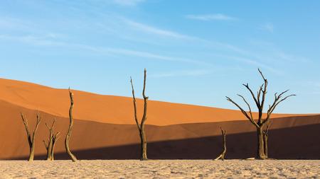 Deadvlei in the Namib Naukluft Park, Sossusvlei, Namibia
