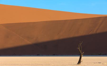 Horizontal lines falling on the dunes at Daedvlei in the Namib Naukluft Park in Namibia Stok Fotoğraf