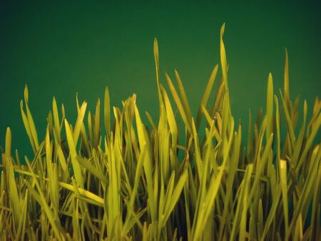 Grass on green background Stock Photo - 2547381