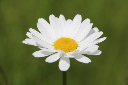 medicinal plant: Medicinal plant Stock Photo