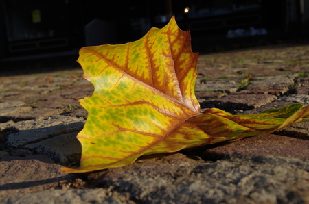 A leaf in the autumn photo
