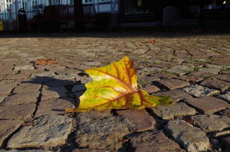 autumn motif: A colorful maple leaf au a road