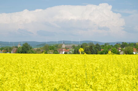 Rapeseed field in front of a city photo