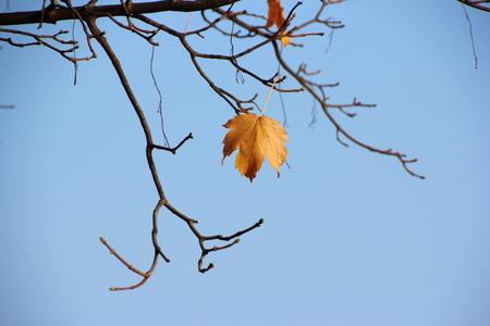 pflanzen: Ein letztes Blatt an einem Zweig im Herbst
