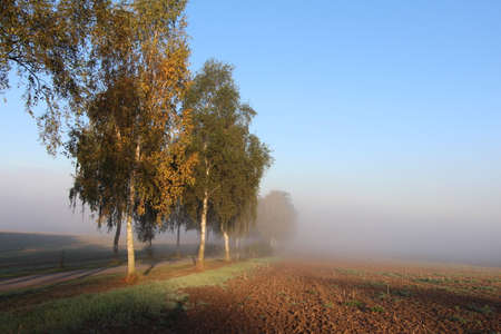 Road with trees in the fog photo
