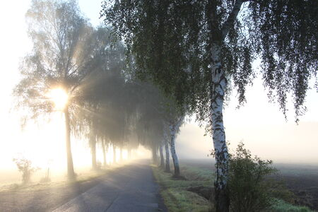 against the flow: Road with trees in the fog Stock Photo