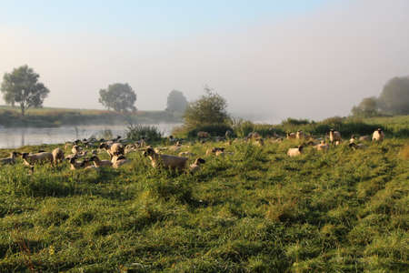 against the flow: Weser at Grohnde in the fog Stock Photo